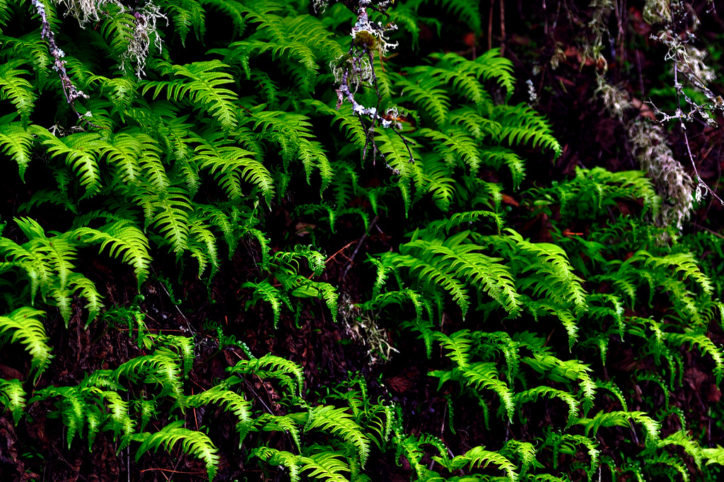 Fern Design Boosts Energy-Storing Capacity of